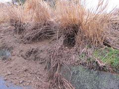 04 wild board digging
