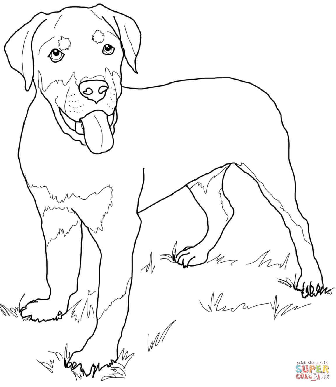 Kleurplaten Honden Labrador.Alleen Kleurplaat Hond Puppy Krijg Duizenden Kleurenfoto S Van De