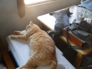William & Mimi Lying on the Cooler & Table