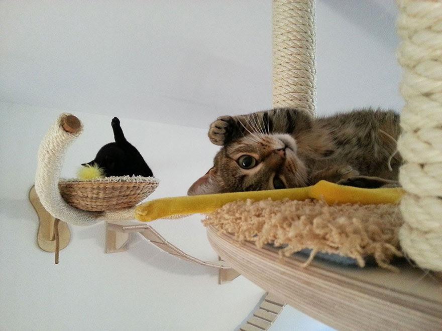 moveis-para-gatos-31