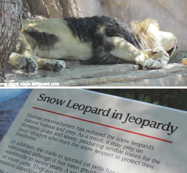 Denver Zoo Collage3 Lion