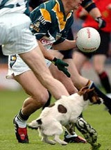 Dogs in football: Problematic
