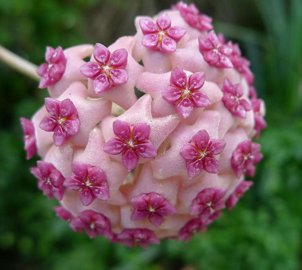 25 Fotografias de plantas para os amantes da matemática