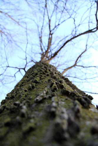 tree_texture