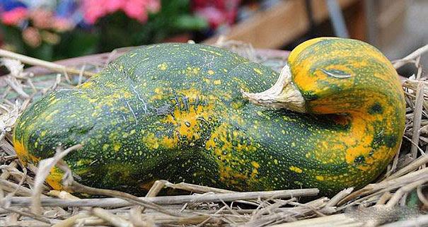 Foto Buah Dan Sayuran Berbentuk Lucu 7