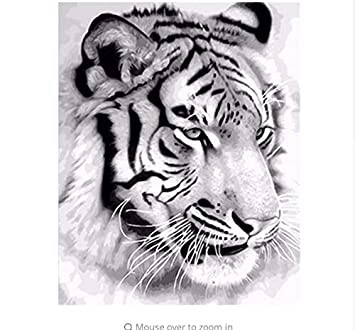 Bilder Zum Nachmalen Tiere - Tier Malen
