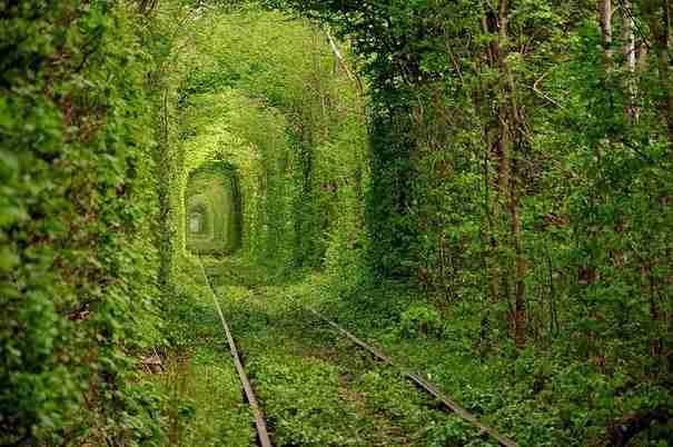 dinfo.gr - Υπέροχα τοπία: Τα 24 ωραιότερα τούνελ από δέντρα στον κόσμο!