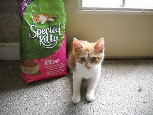 modeling for the cat food company