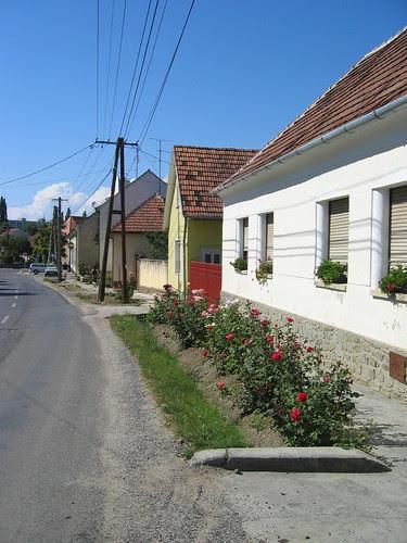 House with rosebushes