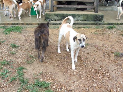 Dogs in NANAS
