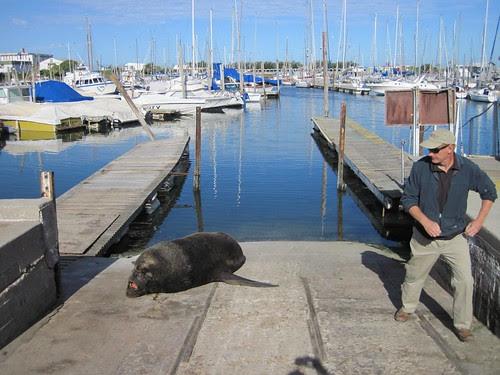 Sea lion gets respect