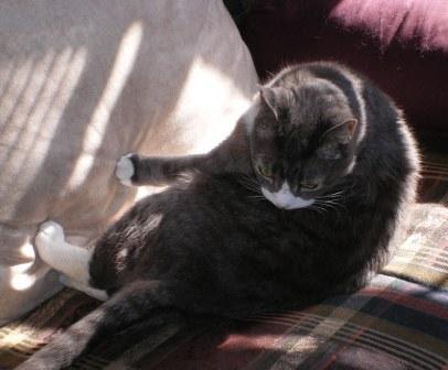 LB Doing Cat Things in Sun