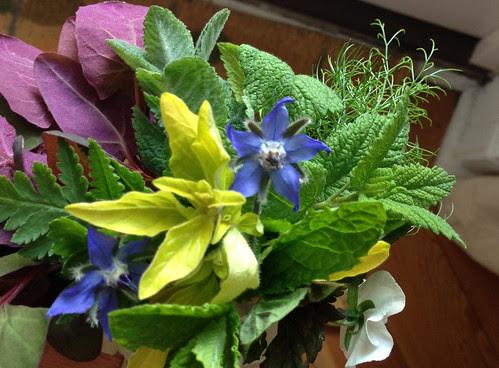 Herbs 27May