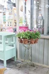 petit french geranium garden