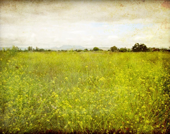 "Landscape Photography -  Flower meadow rustic nature wall art - green decor  ""Mustard field"" - LupenGrainne"