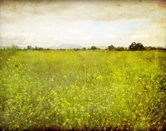 "Landscape Photography - Flower meadow rustic nature wall art - green decor ""Mustard field"" - LupenGrainne"