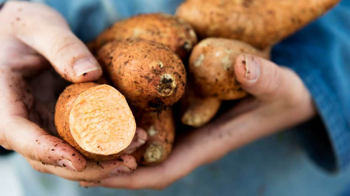 Sweet Potatoes vs Yams: What is the difference?