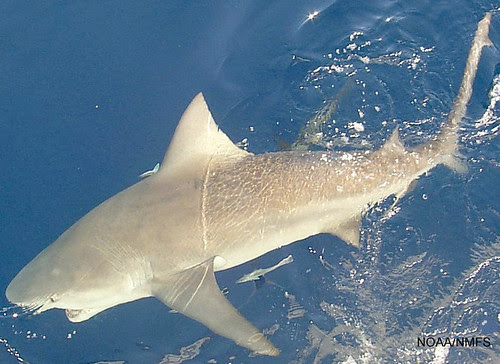 fish4141
