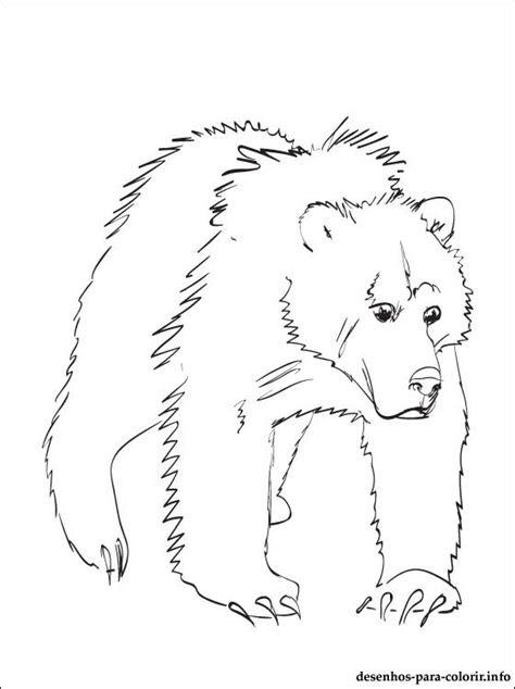 desenho de urso cinzento  colorir desenhos  colorir