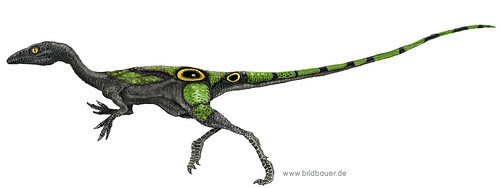 Black Compsognathus