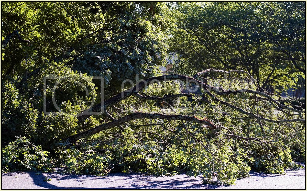 Downed Trees 6-14-13