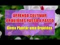 ==> 4 Dicas Simples para Cuidar de Orquídeas Facilmente