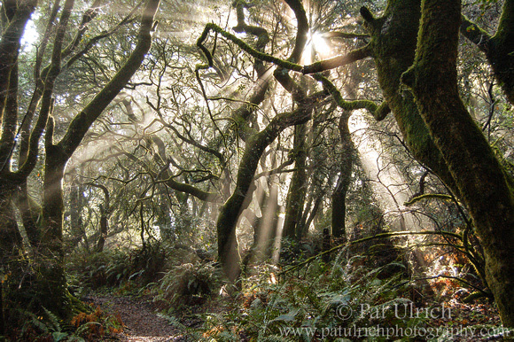 Photograph of light streaming through a foggy forest in Tomales Bay State Park