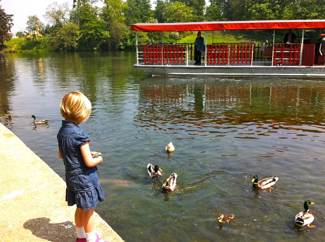 Ducks & G