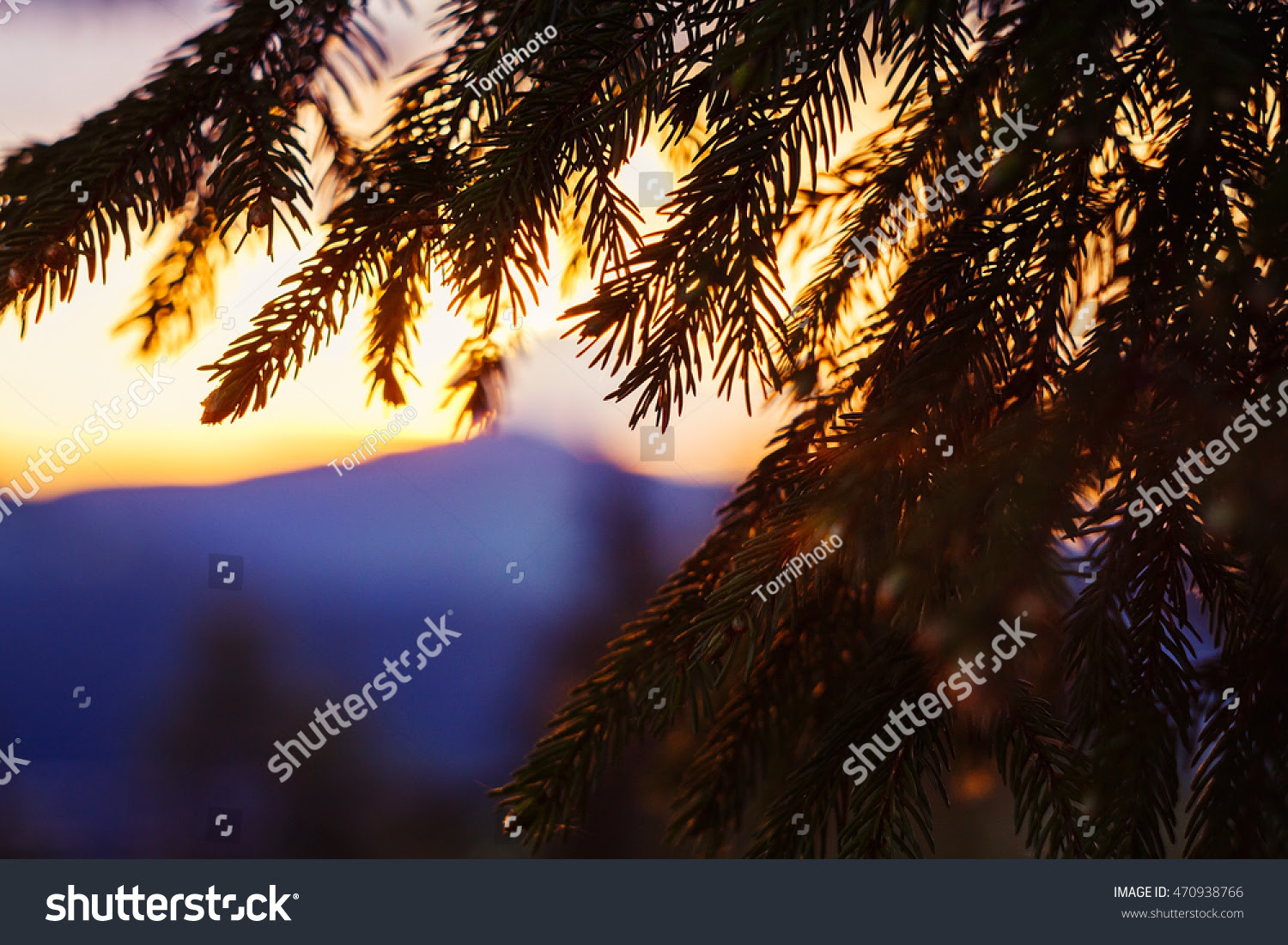 abstract, background, beam, beauty, black, carpathians, close, color, colorful, countryside, dawn, dusk, evening, fir, focus, forest, gold, golden, hotspot, light, magic, majestic, mist, mountains, natural, nature, orange, outdoor, pine, red, scene, scenery, scenic, season, serenity, shadow, shallow, silhouette, spruce, summer, sun, sunbeam, sunny, sunrise, sunset, travel, tree, warm, weather, wood, yellow