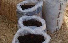 Produtos naturais substituem fertilizantes e agrotóxicos