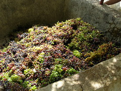 wine press ramni hania chania