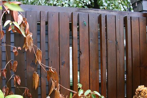 copper gate bad side fence