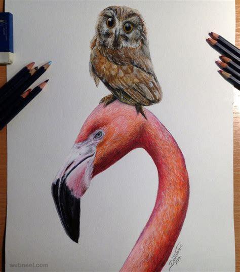 beautiful bird drawings  art works   inspiration