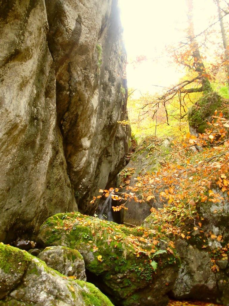 Bosque de Lindes 040