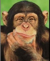 monkey_thinking-236