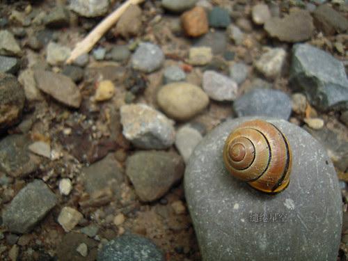 躲在石头上晒太阳的蜗牛