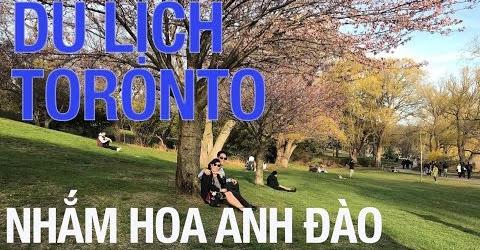 Du lịch Toronto - Hoa anh đào tại công viên High Park - Toronto, Canada
