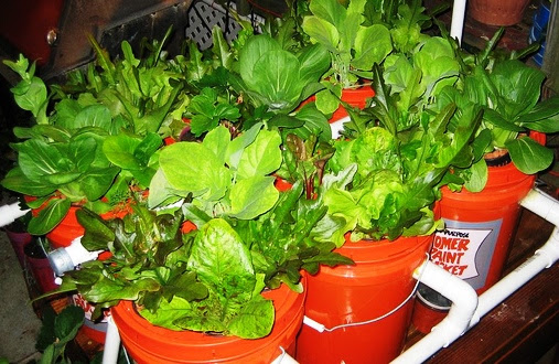 Aquaponics System Five Gallon Ideas