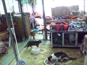 volontariato gattile