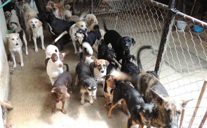 Perritos callejeros flamélicos en refugio local son obligados a comerse entre sí para sobrevivir