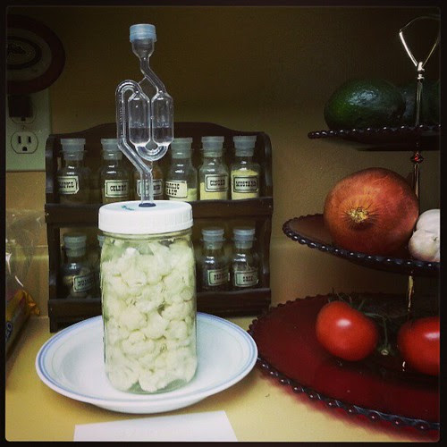 Attempting brine pickling #fermenting #perfectpickler