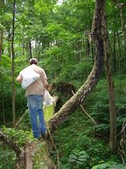 Les crossing the Tree of Despair