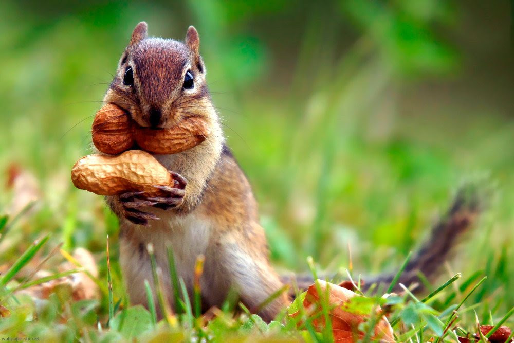Image result for squirrel away