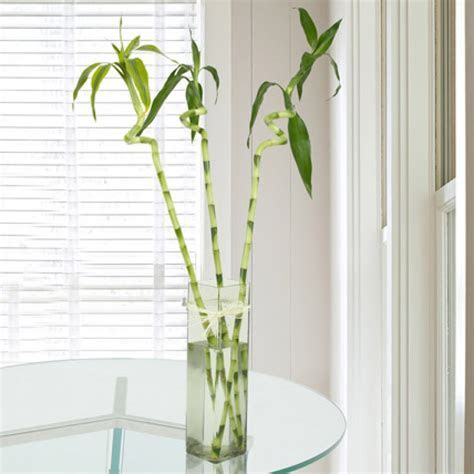 Send 3 Spiral Bamboo Stick Online from BookMyFlowers