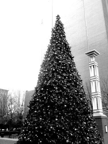 Christmas tree in the rain