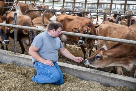 TREND ESSENCE:Is Dairy Farming Cruel to Cows?