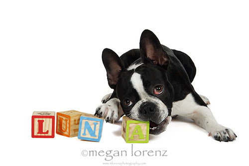 LUNA by Megan Lorenz