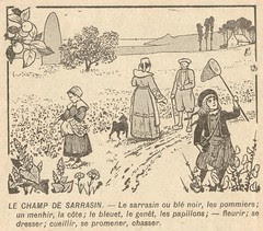champ de sarrasin