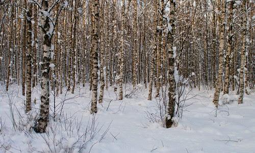 winter2010-11-5