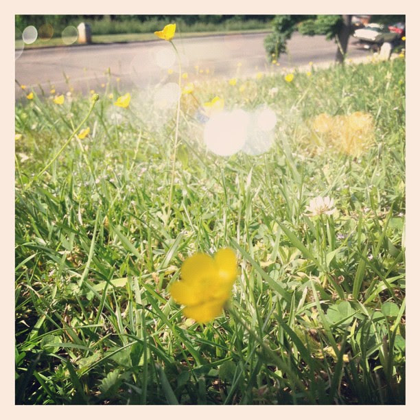 #grass #photoadaymay
